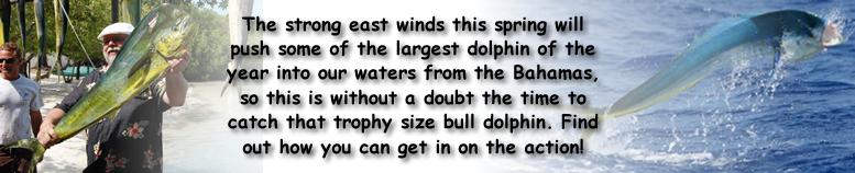 dolphin fishing in islamorada